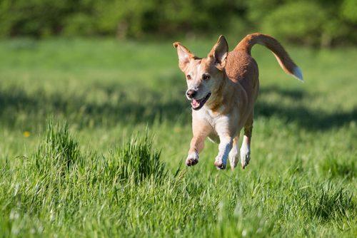 Eindrücke Dogwalking